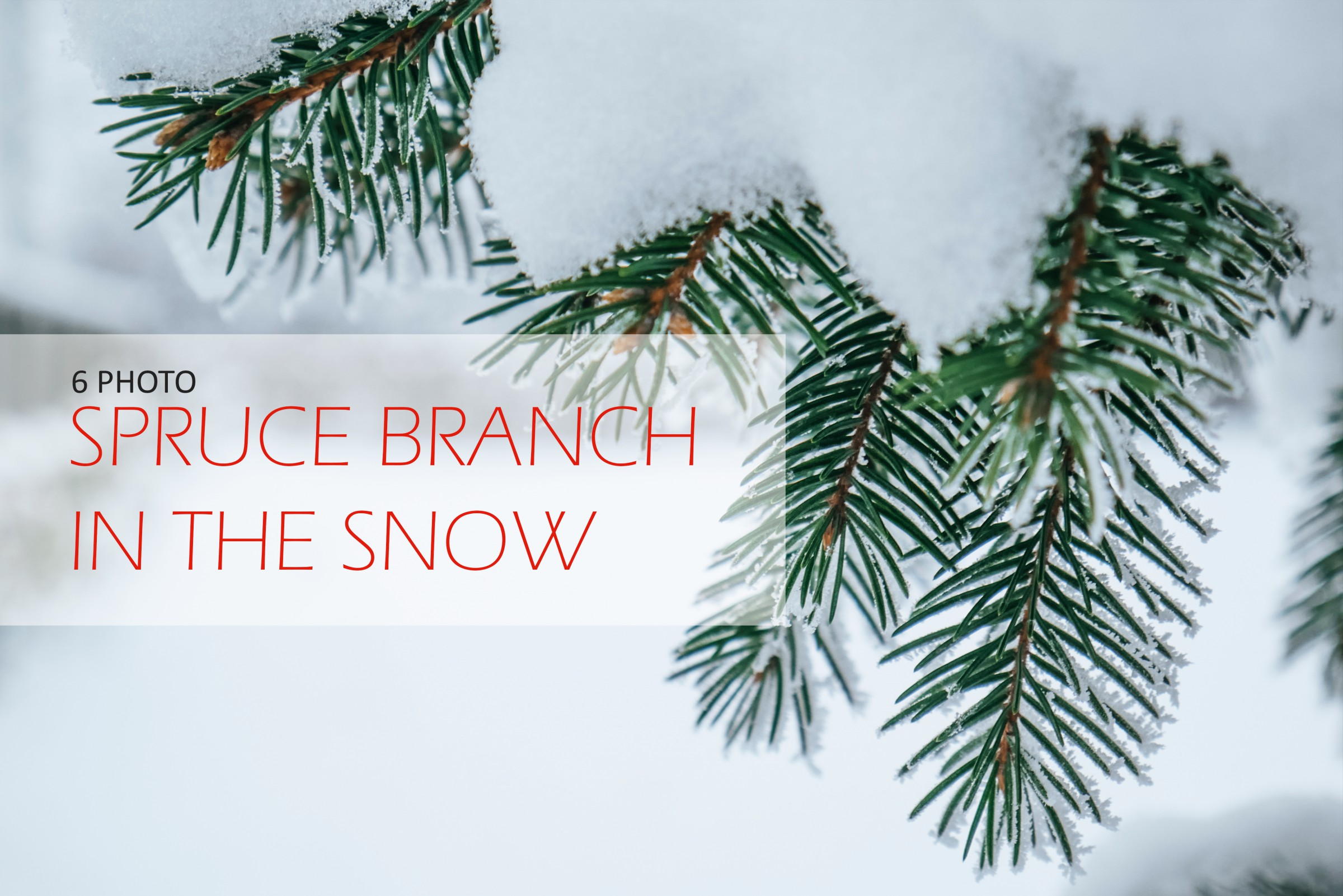 Spruce branch in the snow close-up example image 1