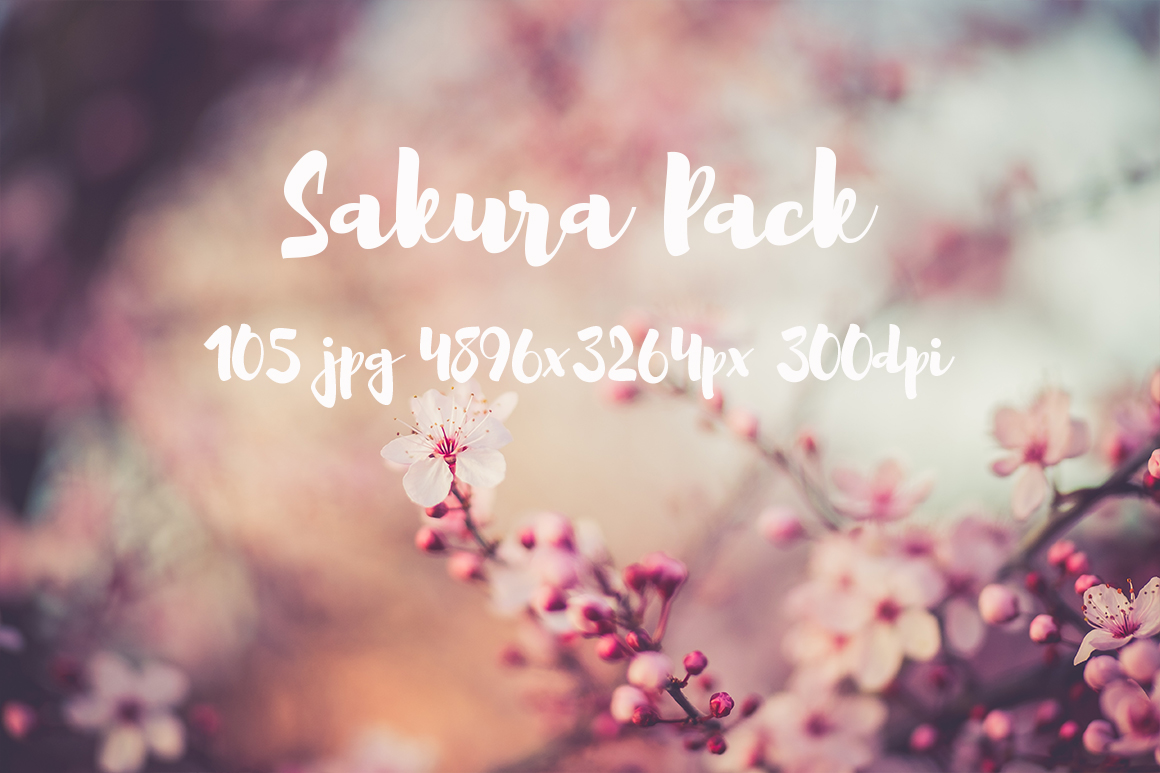 sakura photo pack example image 21