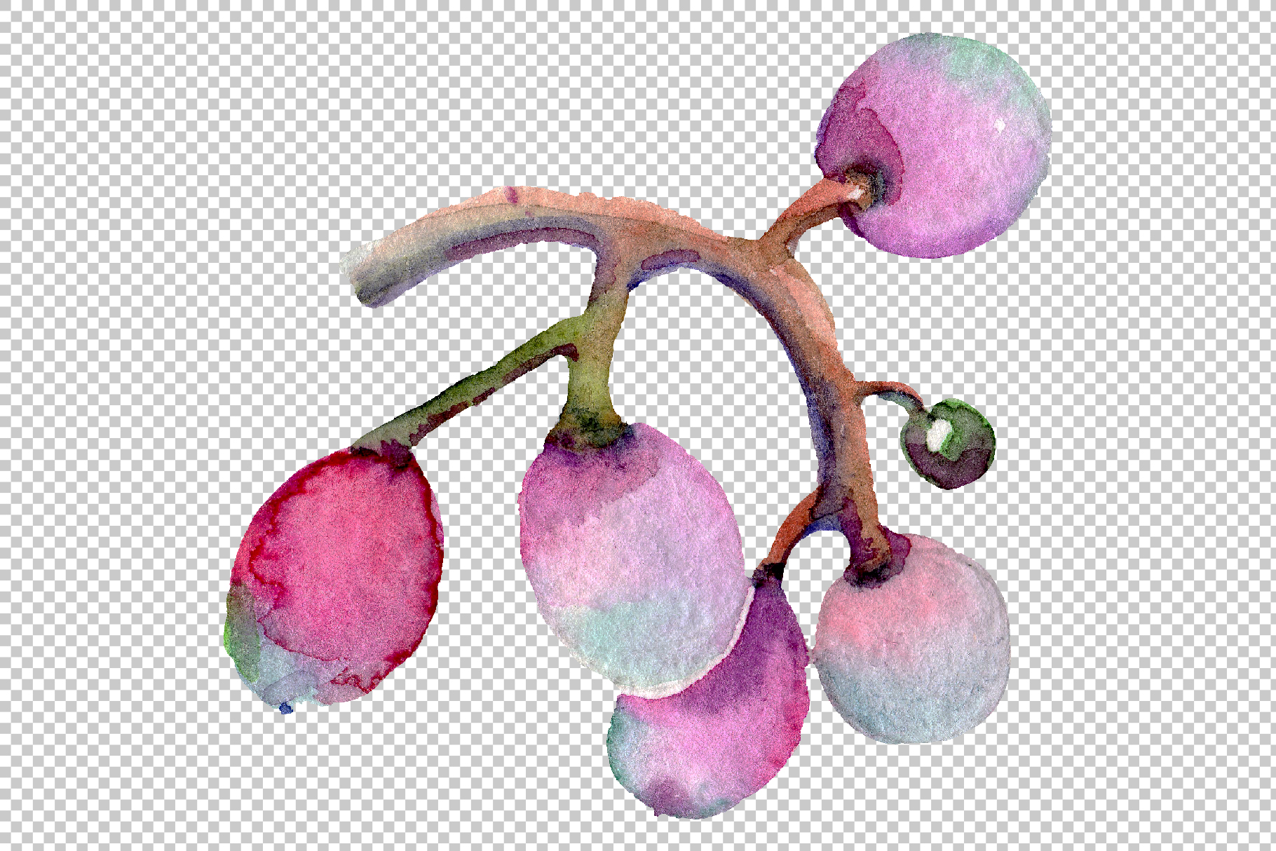 Blue grapes Watercolor png example image 4