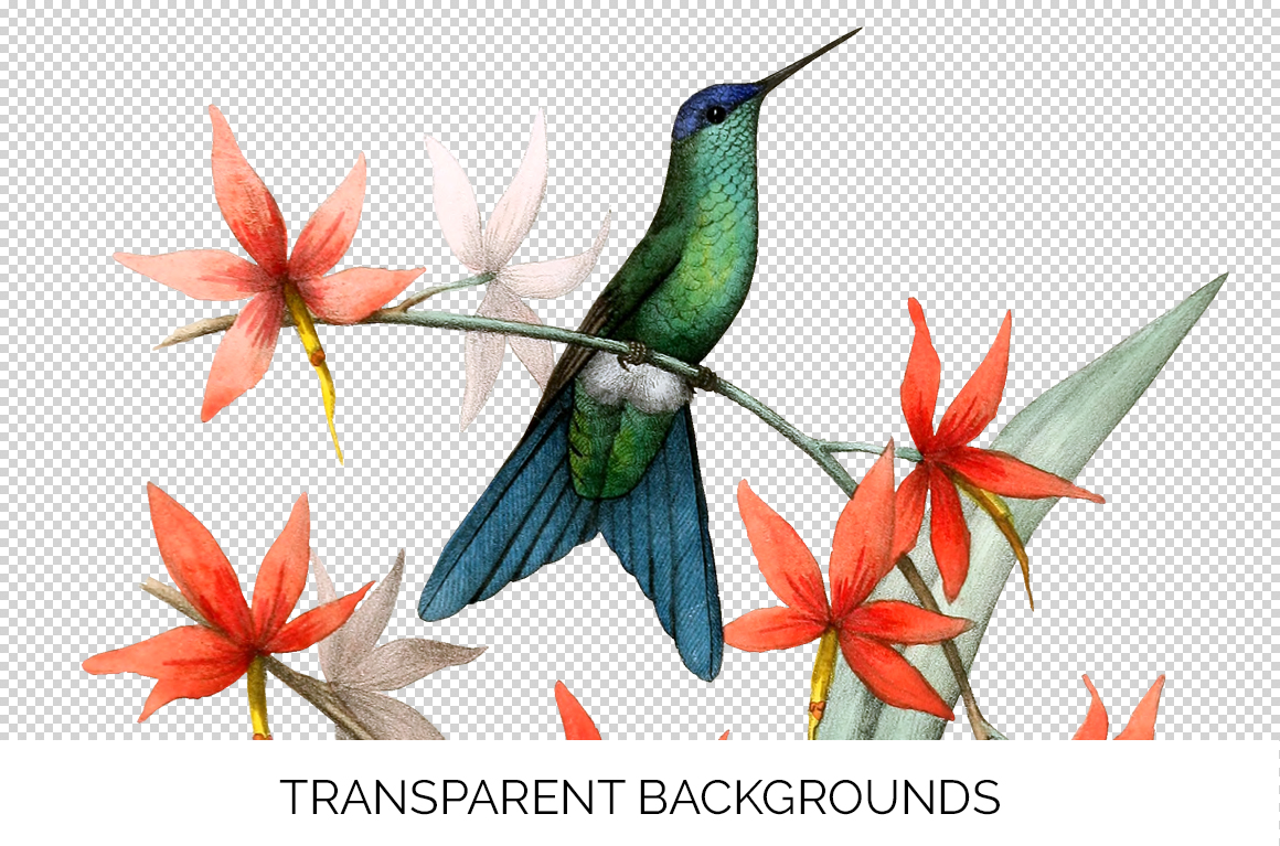 Hummingbird Bundle - Volume One - 20 Count example image 2