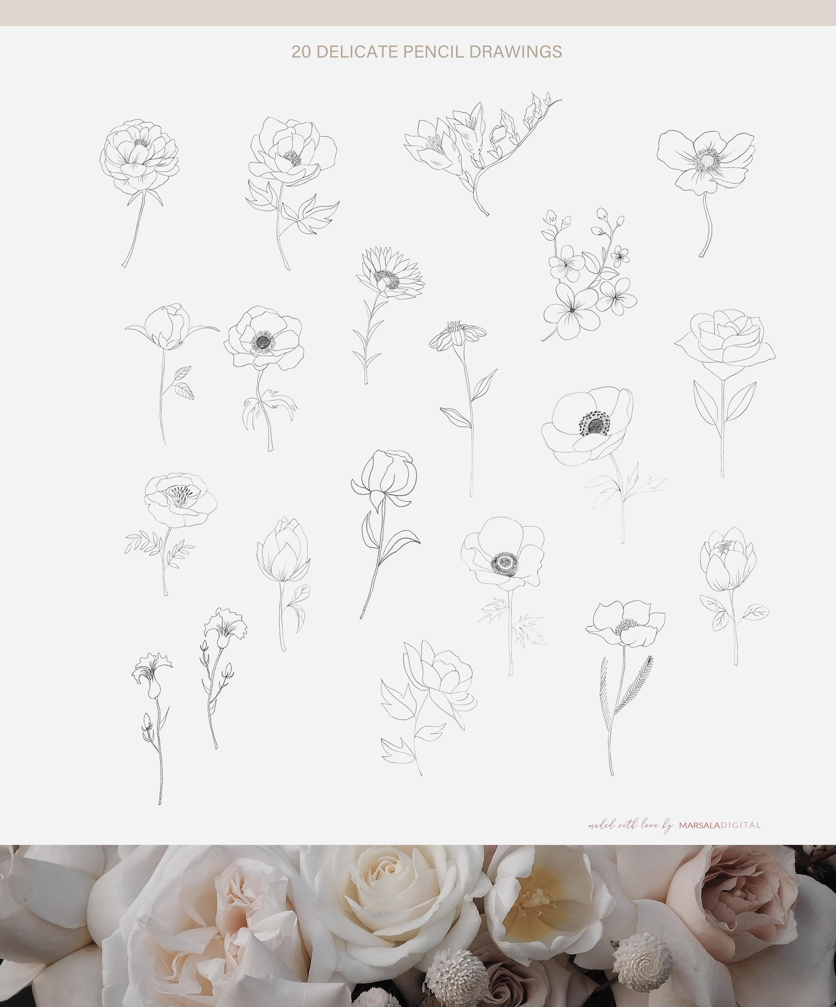 Fine Art Florals - Pencil Sketches example image 6