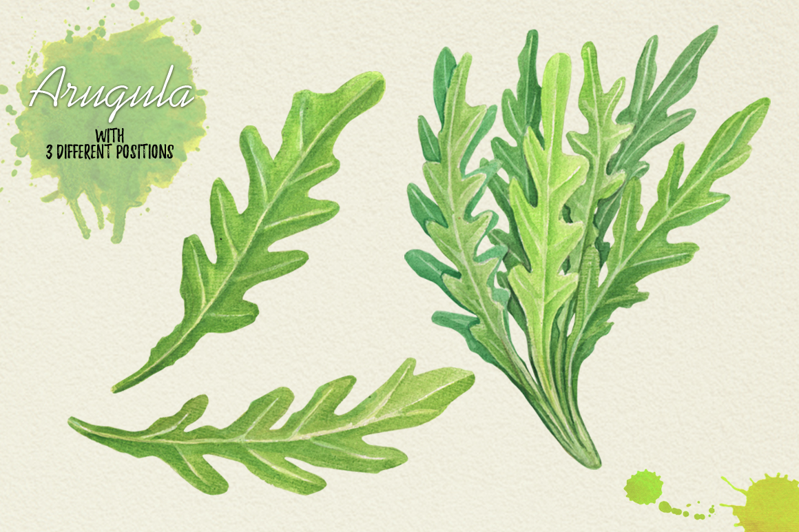 North American Herbs example image 3