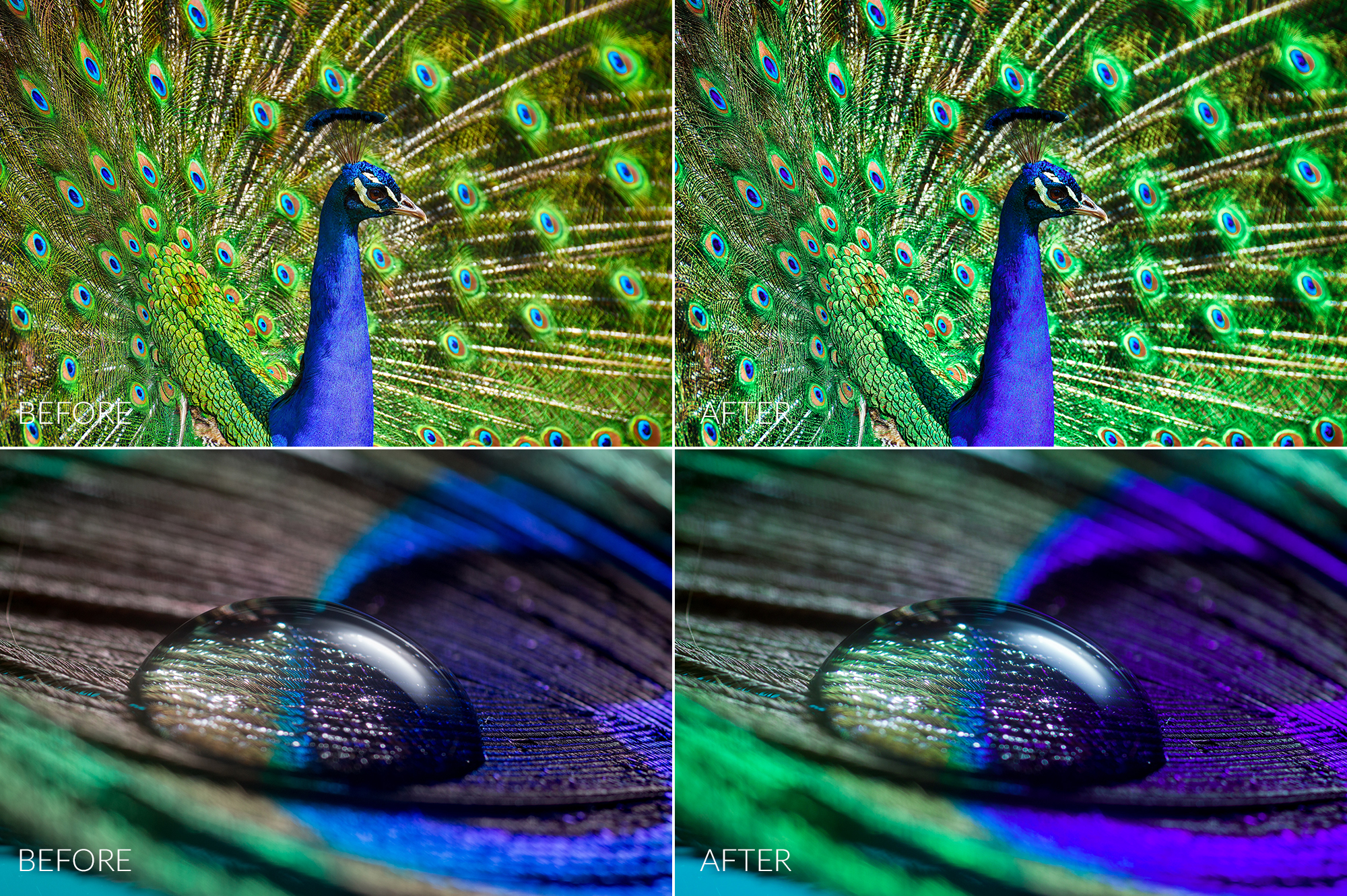 Peacock Lr Presets example image 6
