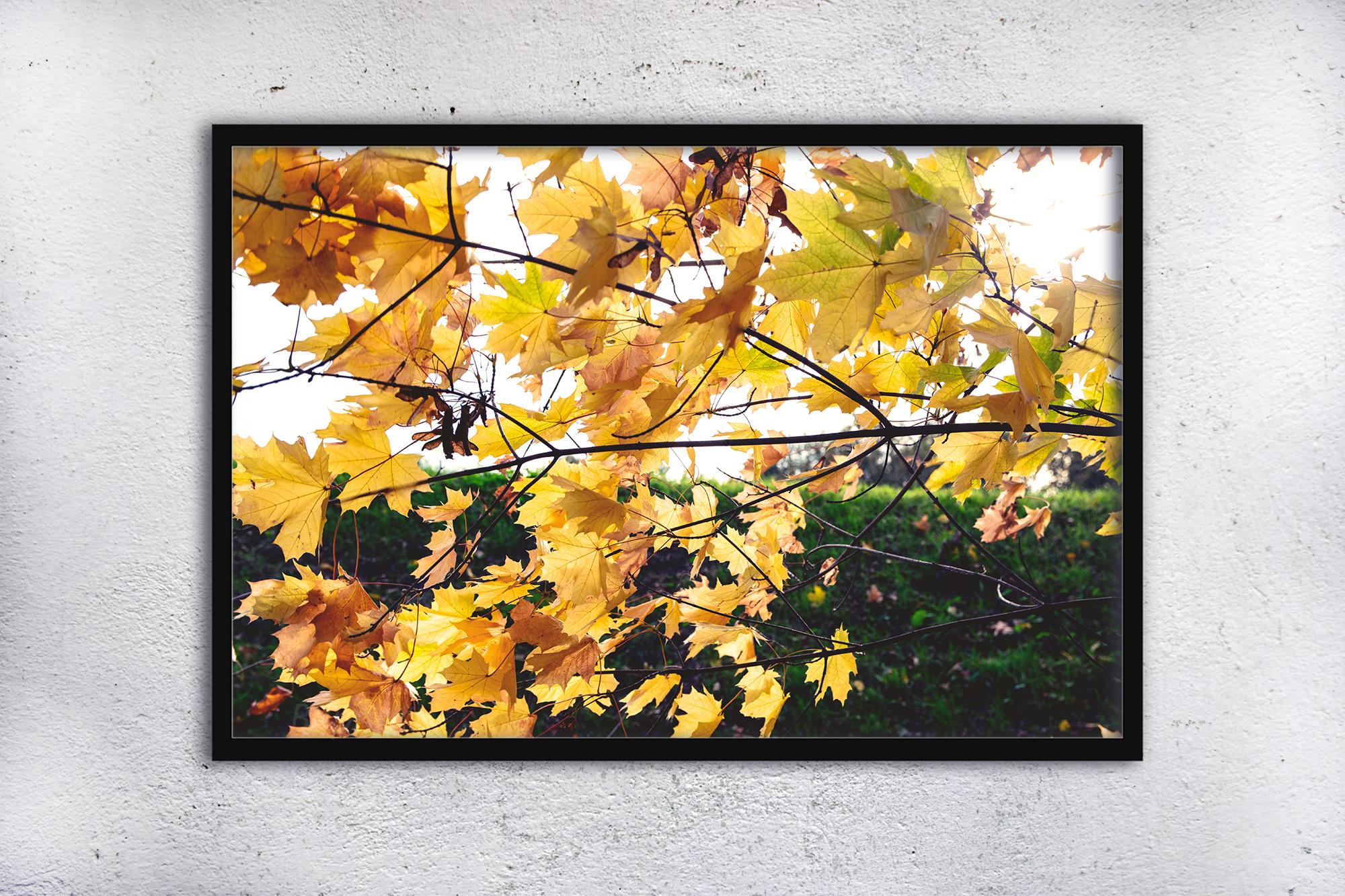 Nature photo, floral print, autumn print, floral example image 2