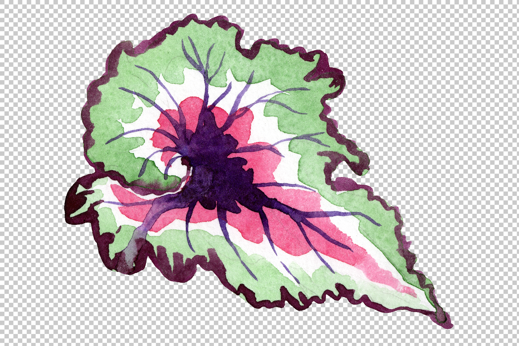 Nautilus-leaf begonia Watercolor png example image 5