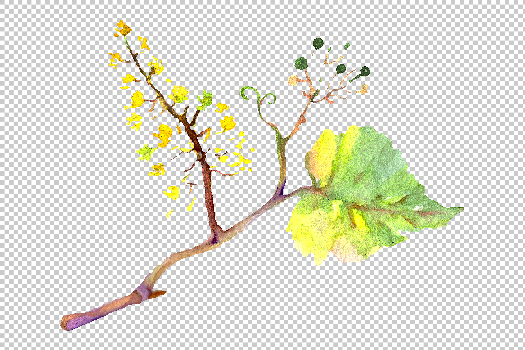 Blue grapes Watercolor png example image 3