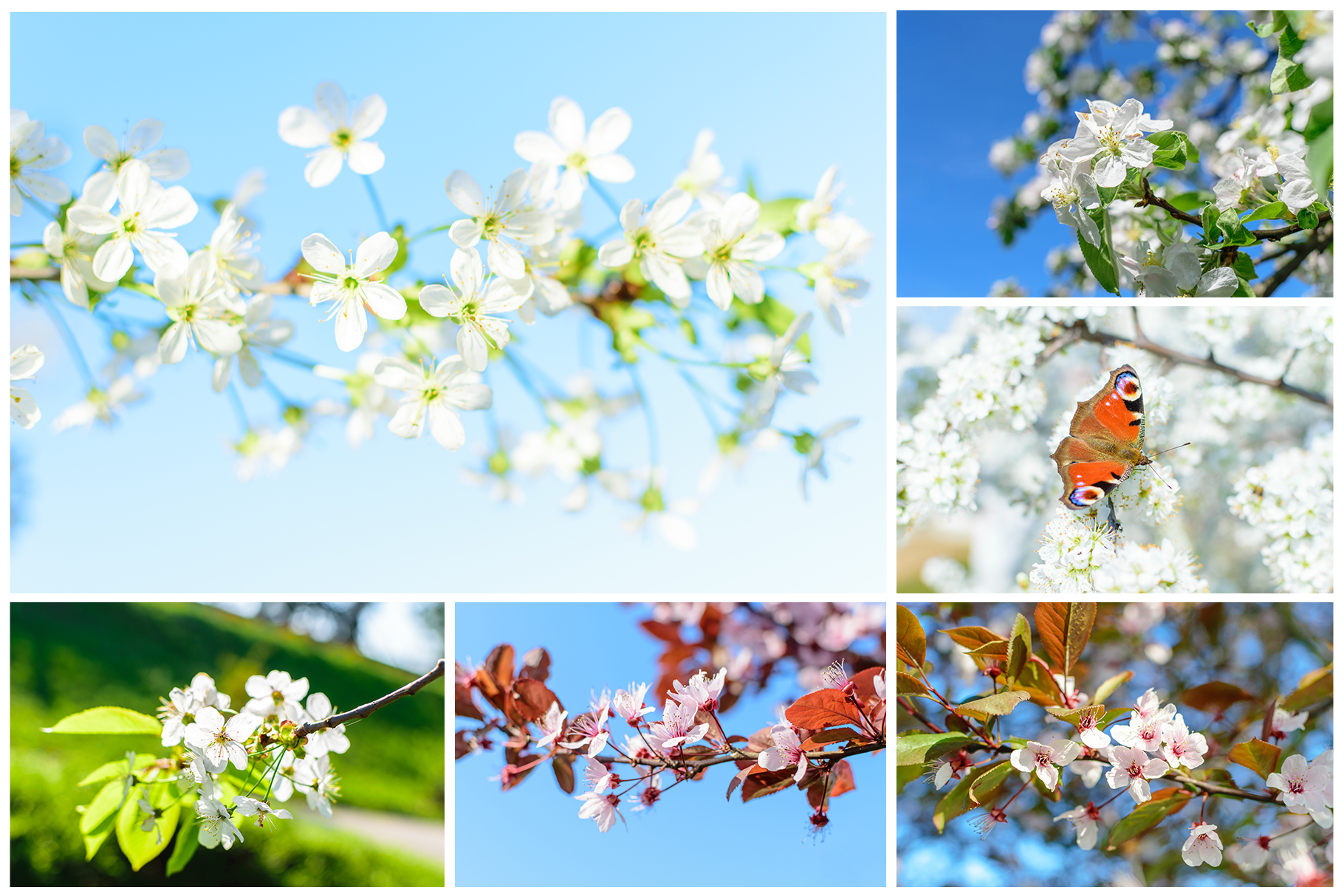Spring Flowers and Paintings Bundle example image 15
