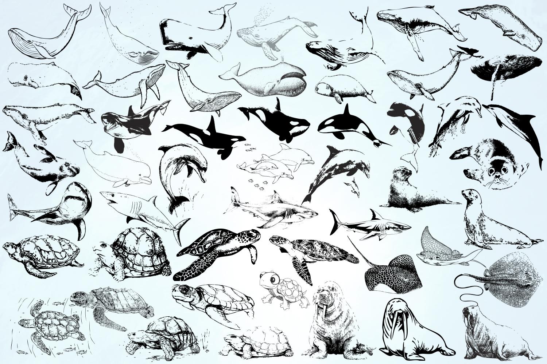 Ocean inhabitants set. Hand drawn illustration collection. example image 7