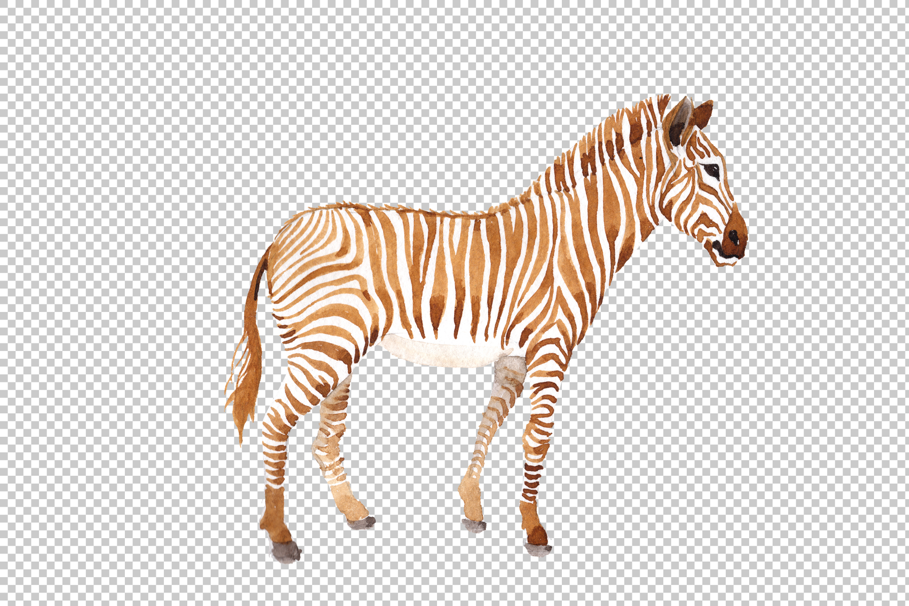 Zebra set Watercolor png example image 2