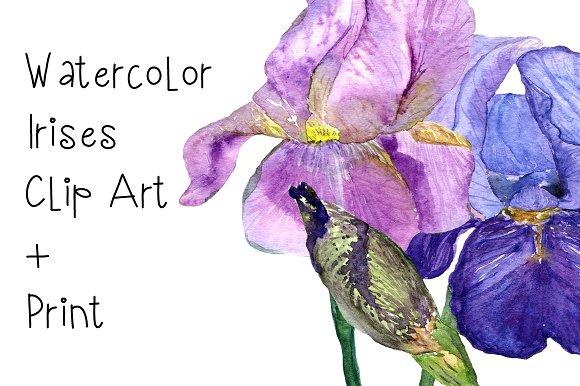Watercolor Irises Clip Art + Print example image 1
