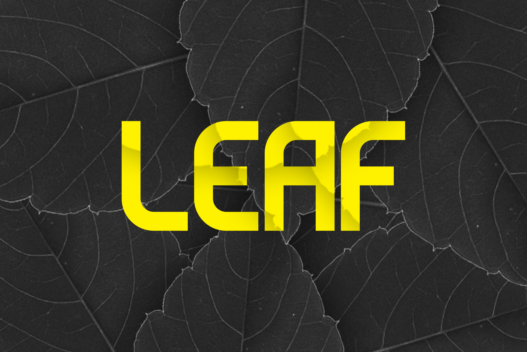 Evo - Sans&Decorative Typeface example image 9