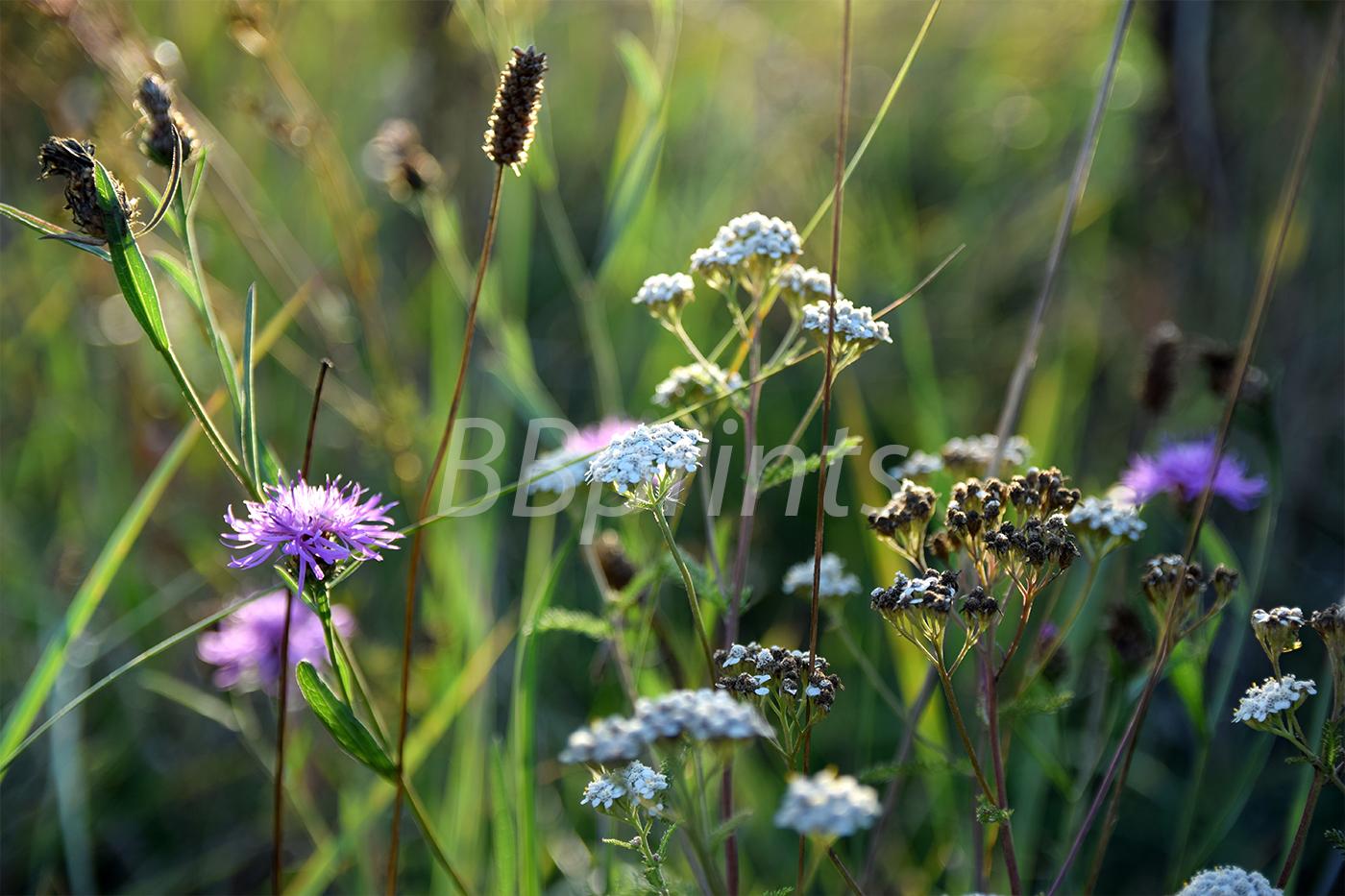 Nature photo, landscape photo, floral photo, summer photo, example image 1