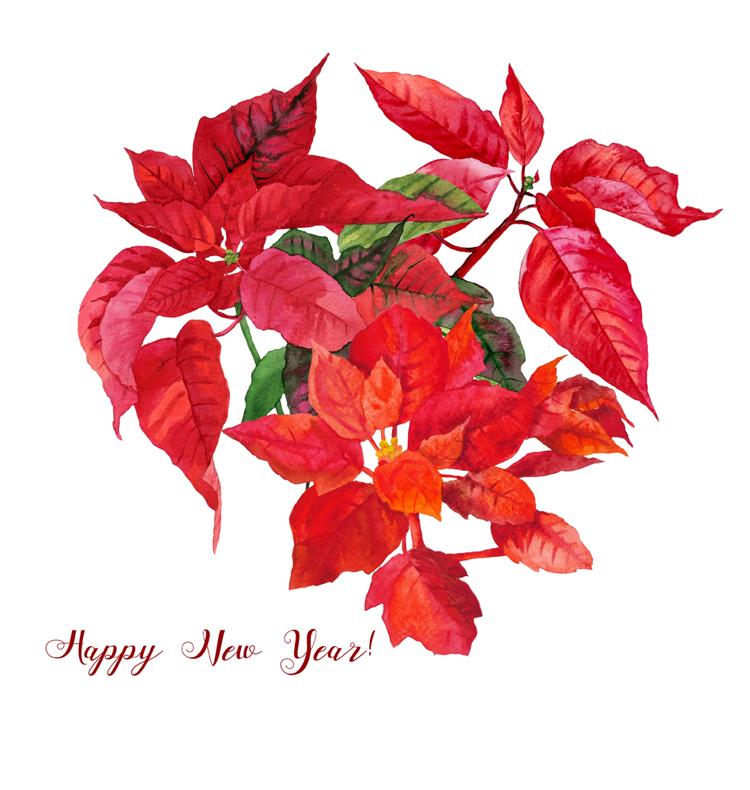 Christmas Poinsettia example image 5