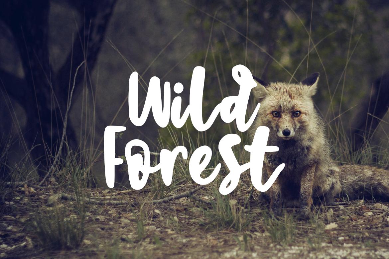 Sweet Brush Font example image 3