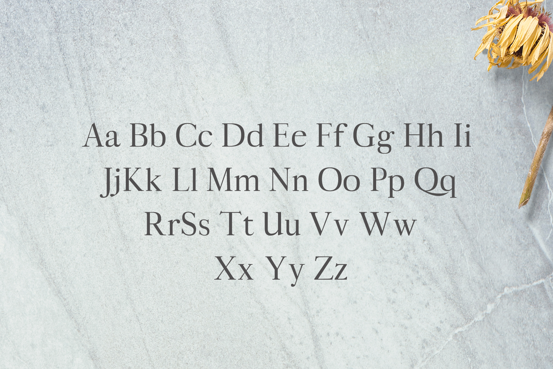 Aludra Serif 12 Font Family Pack example image 2