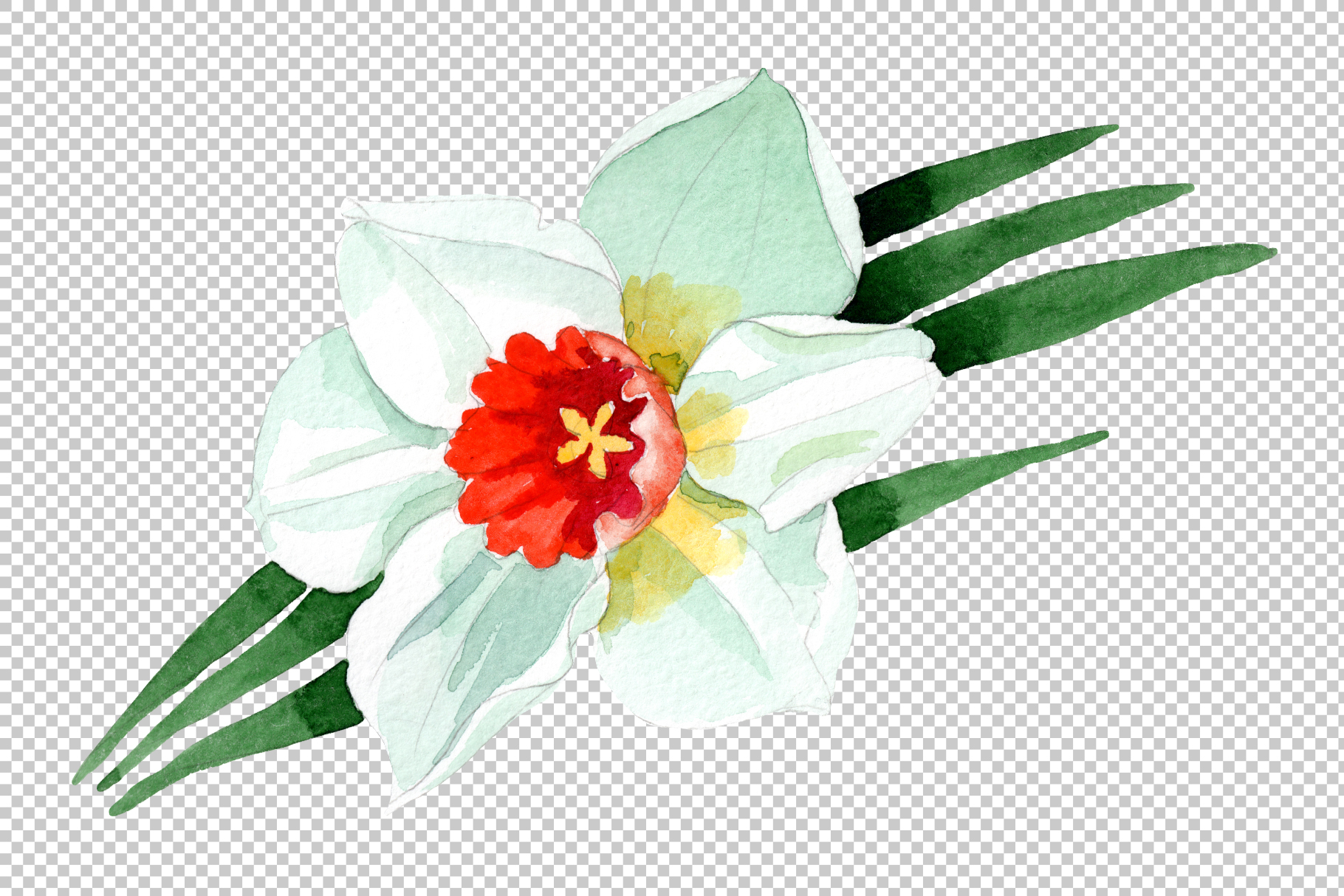 White narcissus Watercolor png example image 3
