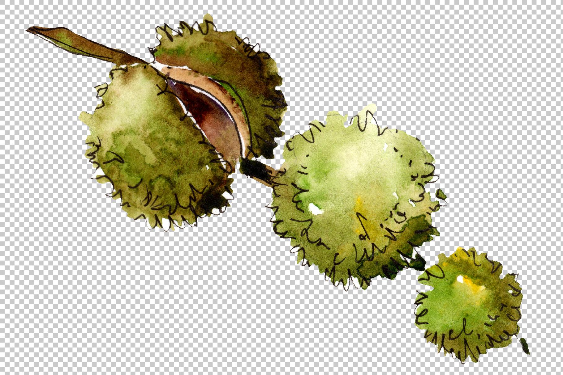 Autumn chestnut PNG watercolor plant set example image 3