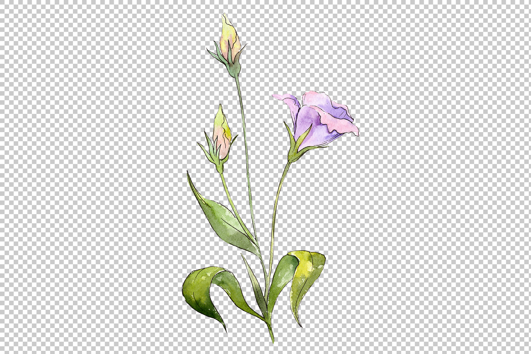 Blue and purple eustoma PNG watercolor set example image 3
