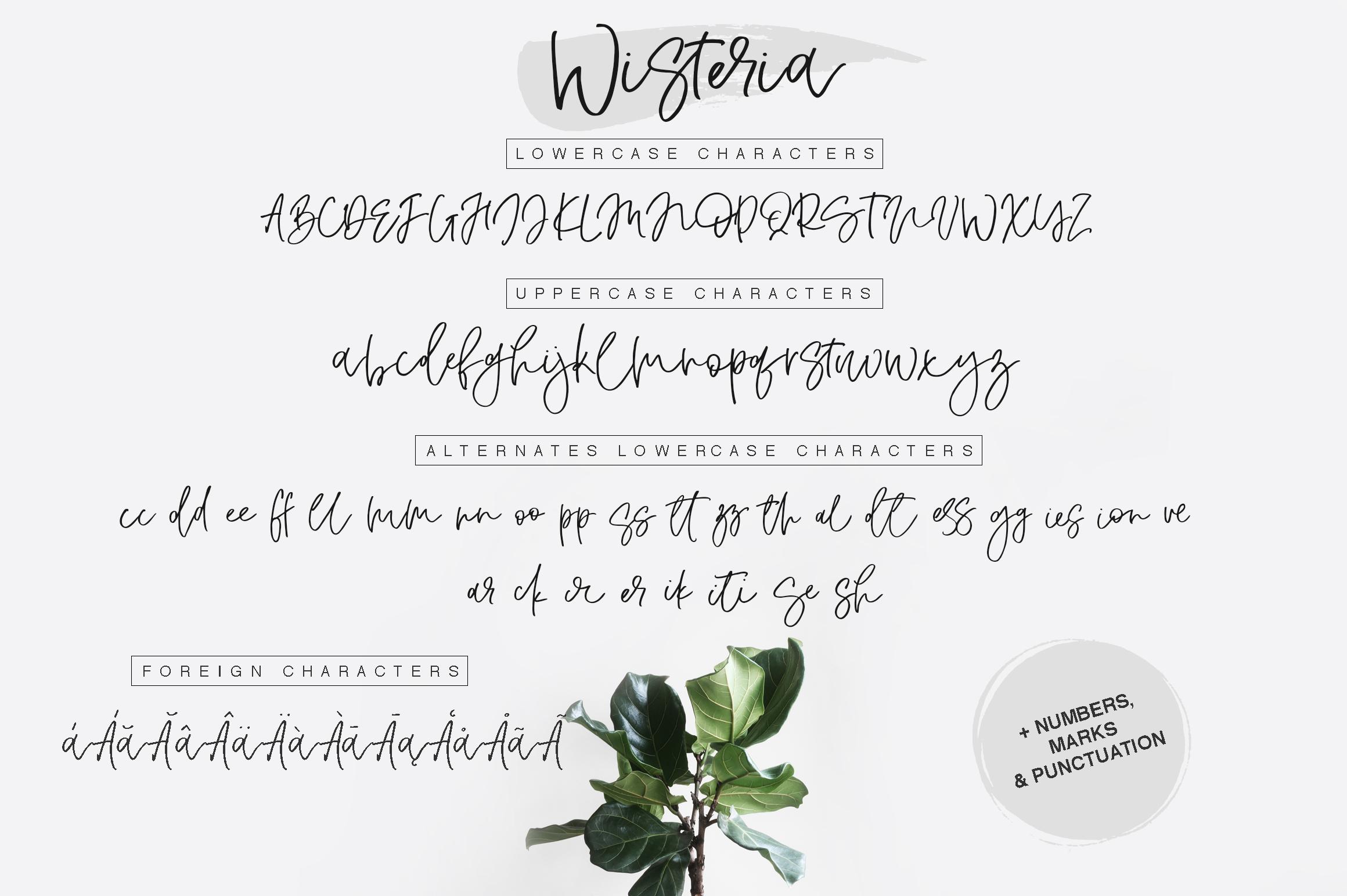 Wisteria Script example image 2