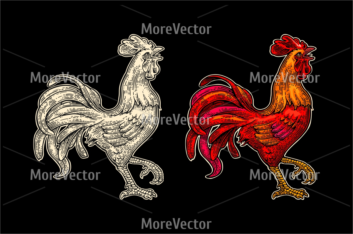 Red fiery rooster. Vintage engraving example image 1