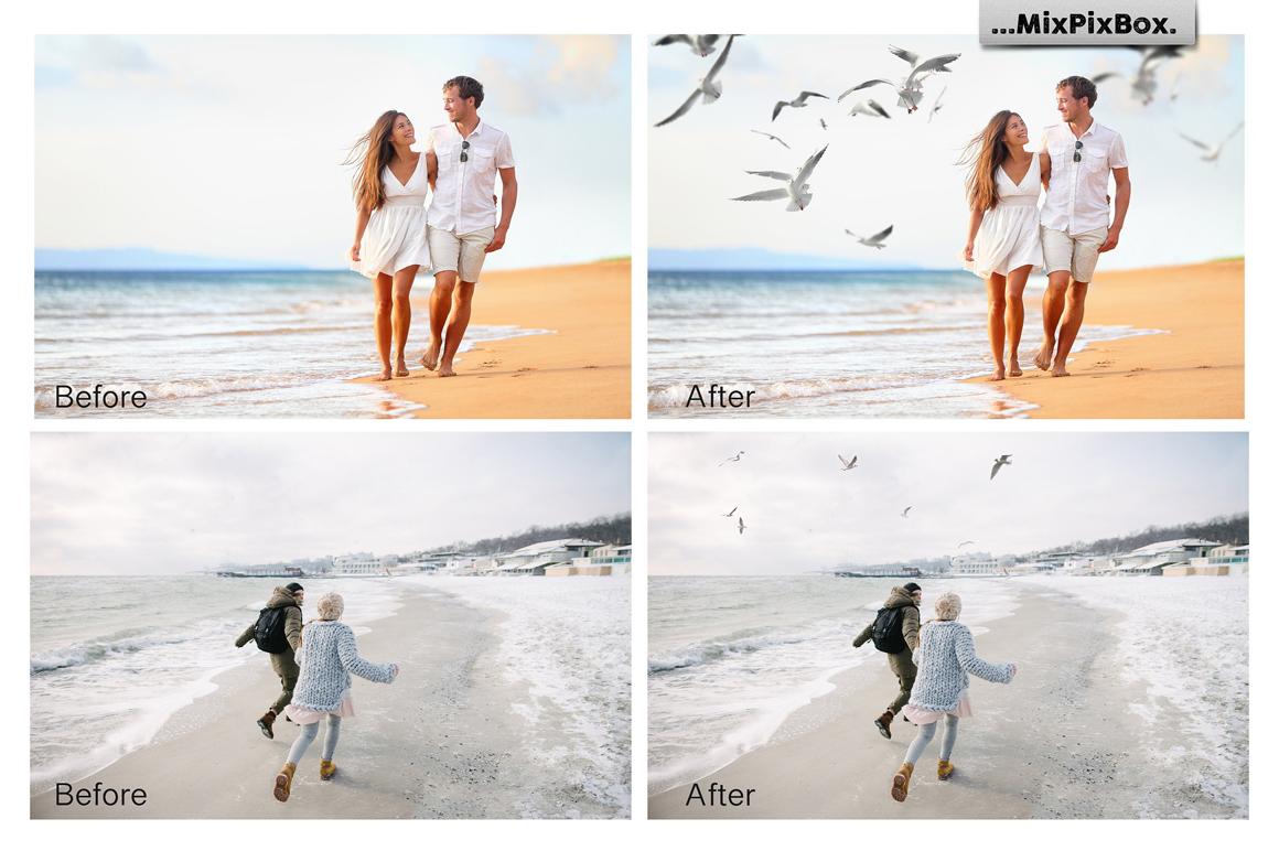 Seagulls Photo Overlays example image 3