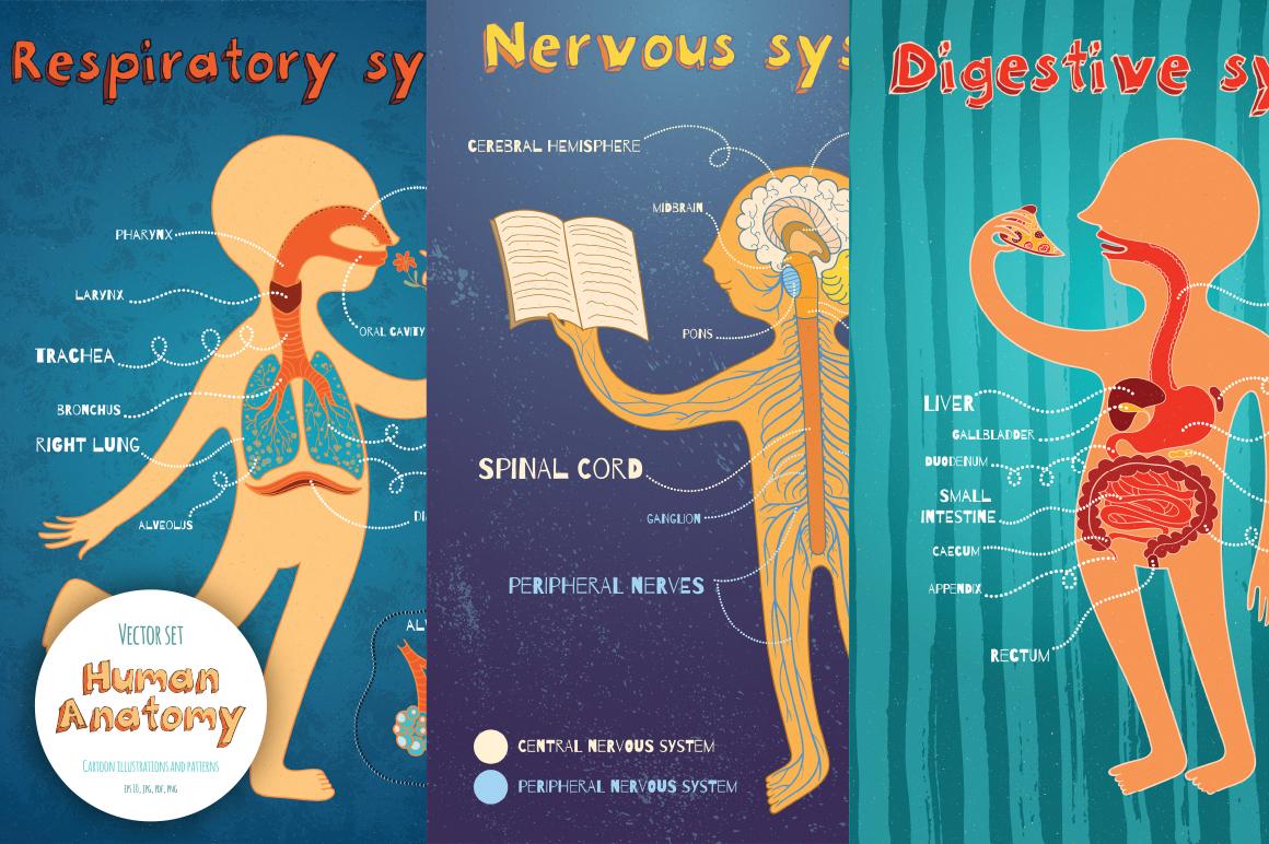 Human Anatomy for kids example image 2