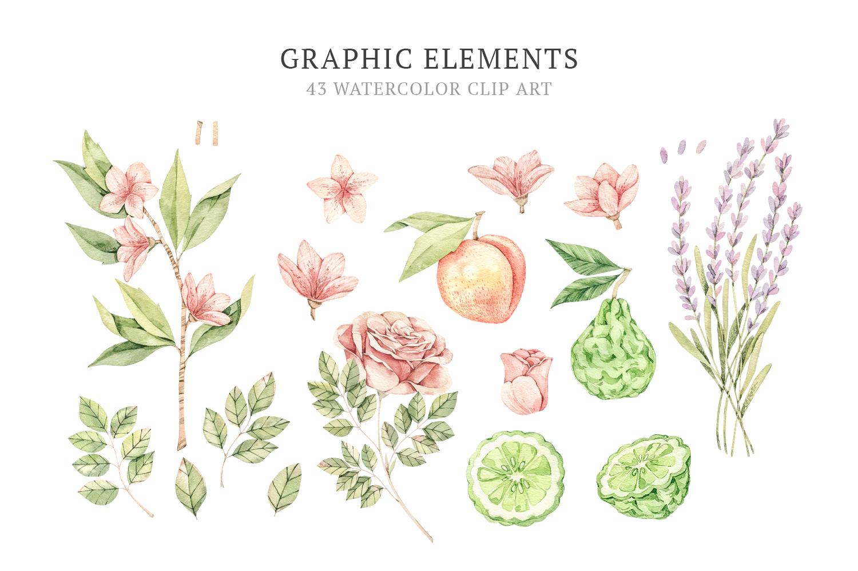 Organic LAB. Watercolor botanical illustrations example image 6