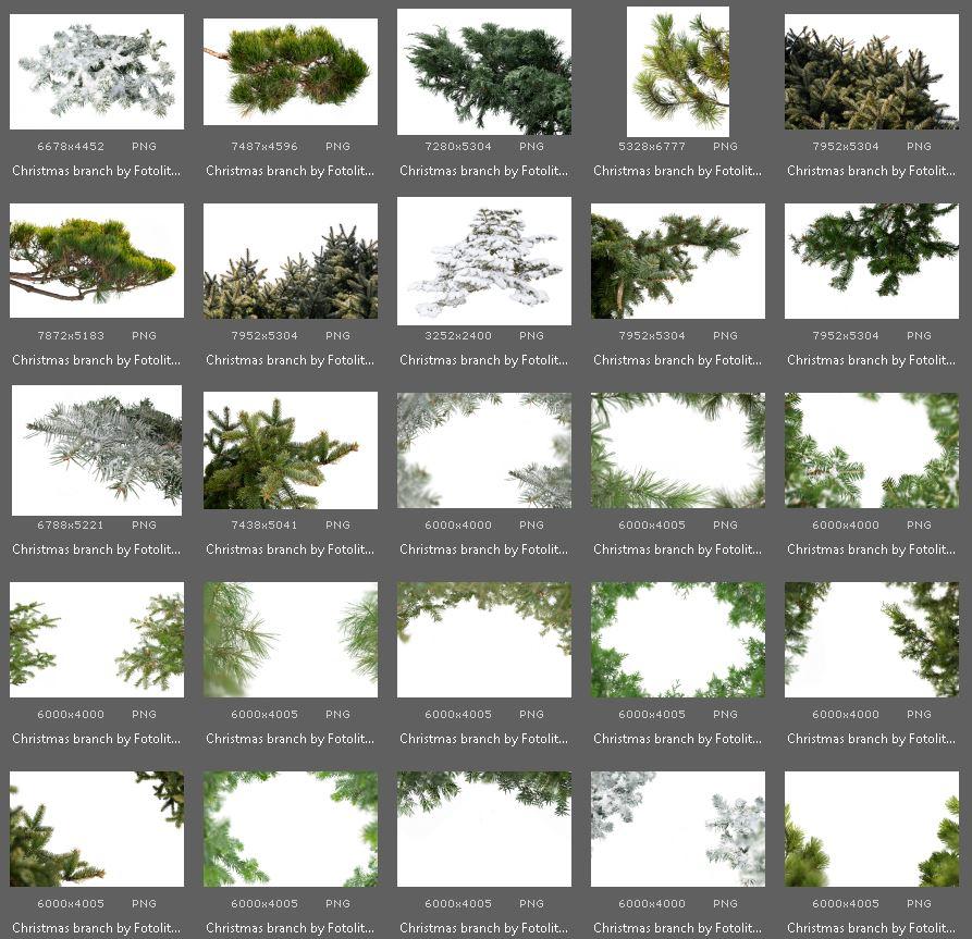 50 Christmas Tree Branch Overlays example image 5
