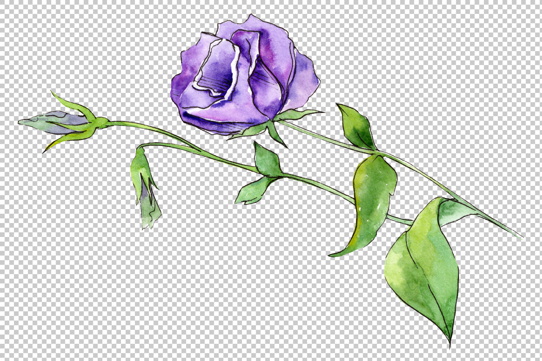 Blue and purple eustoma PNG watercolor set example image 2
