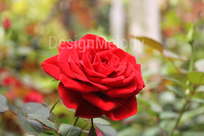 Vibrant Flowers example image 4