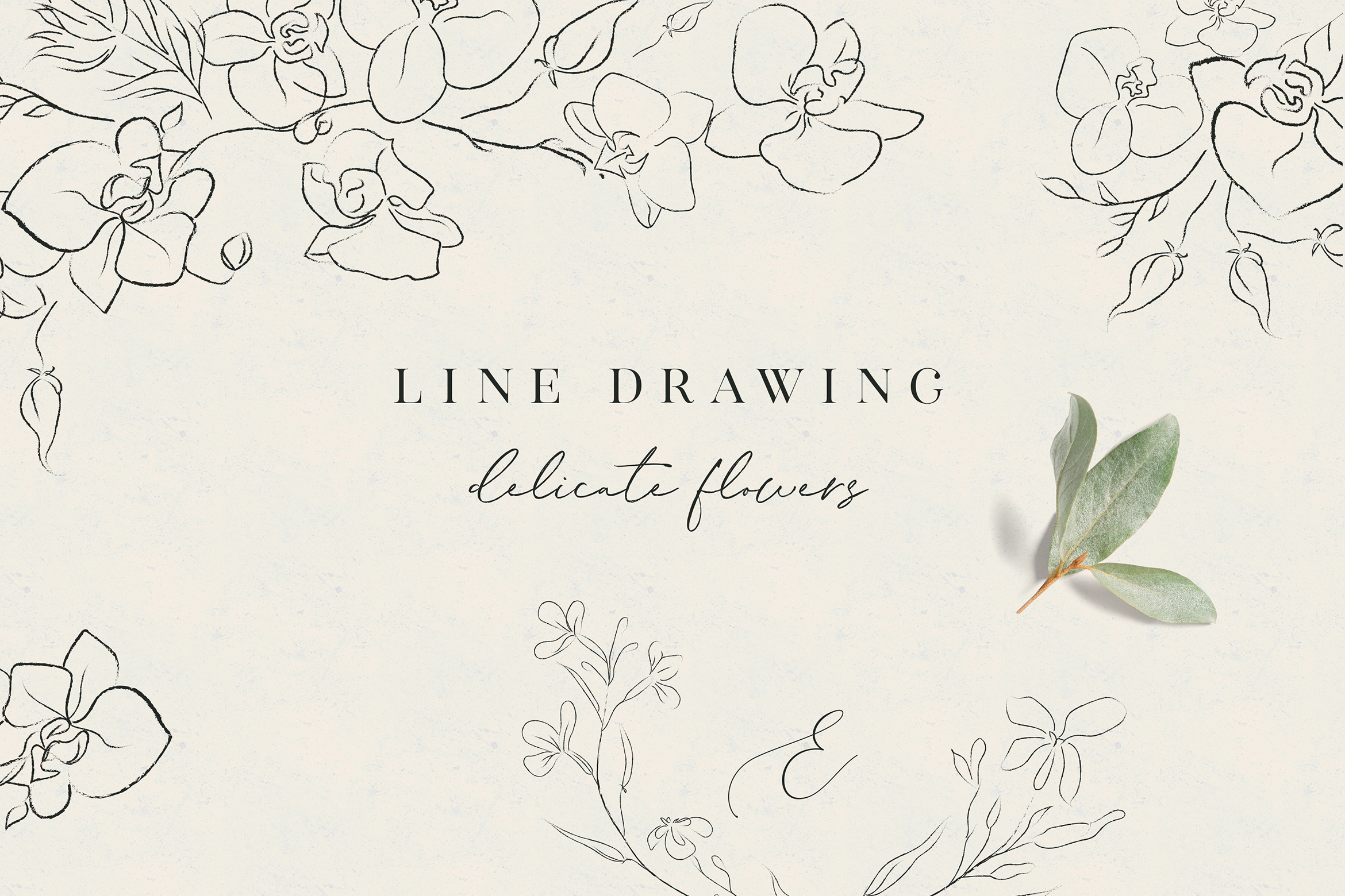 Line clipart hand drawn fine art graphic orchid flower example image 1