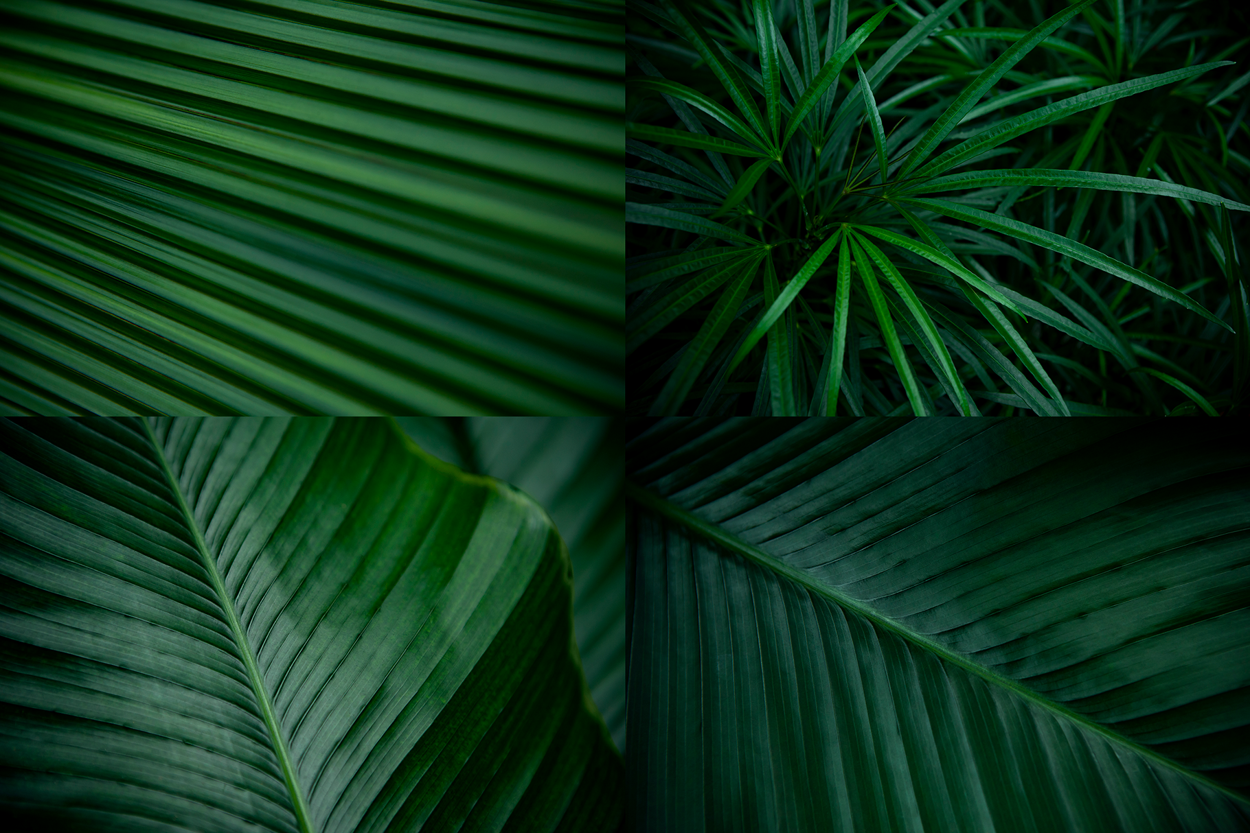 12 Tropical Green Leaves Backgrounds example image 4