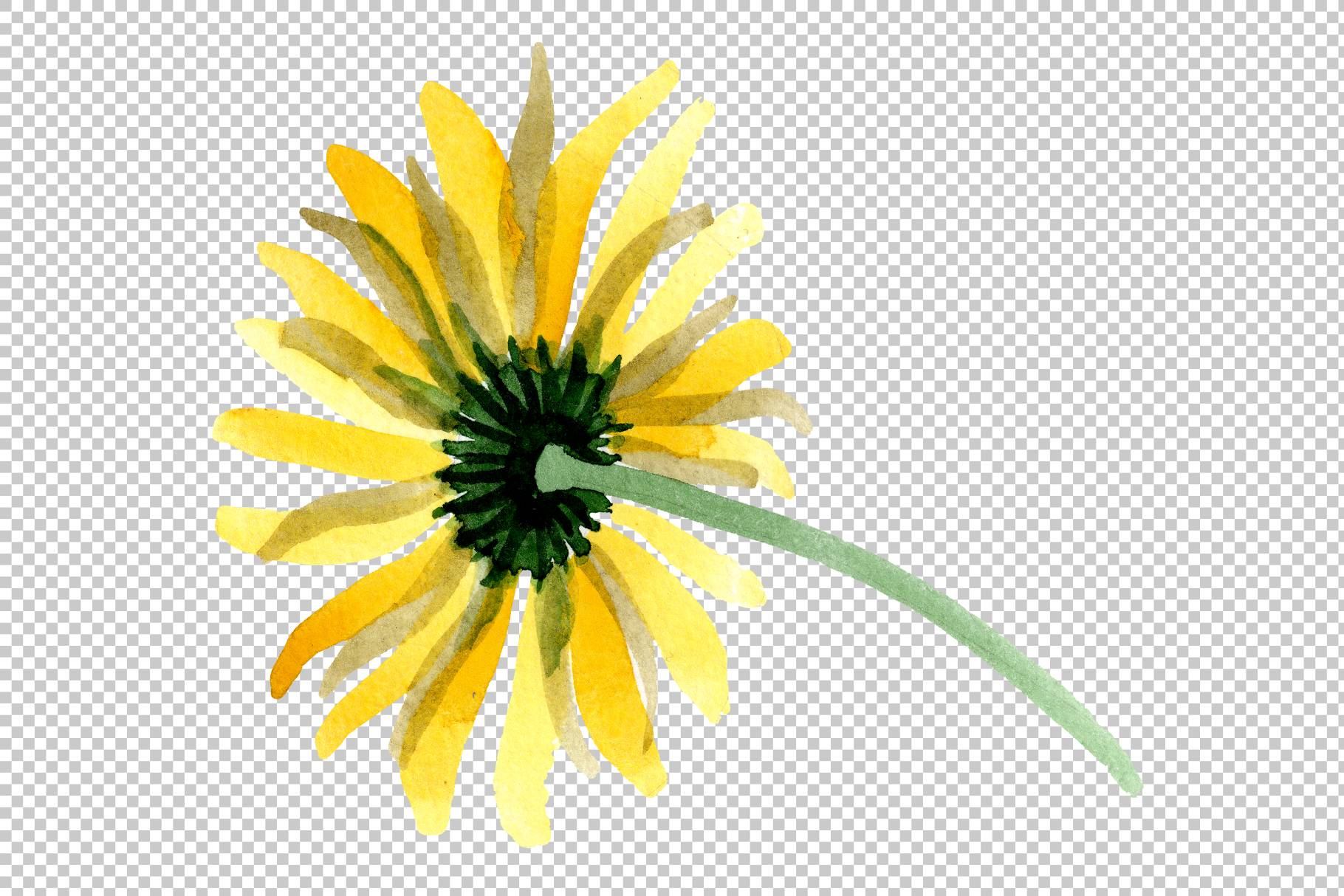 Yellow chamomile Watercolor png example image 6