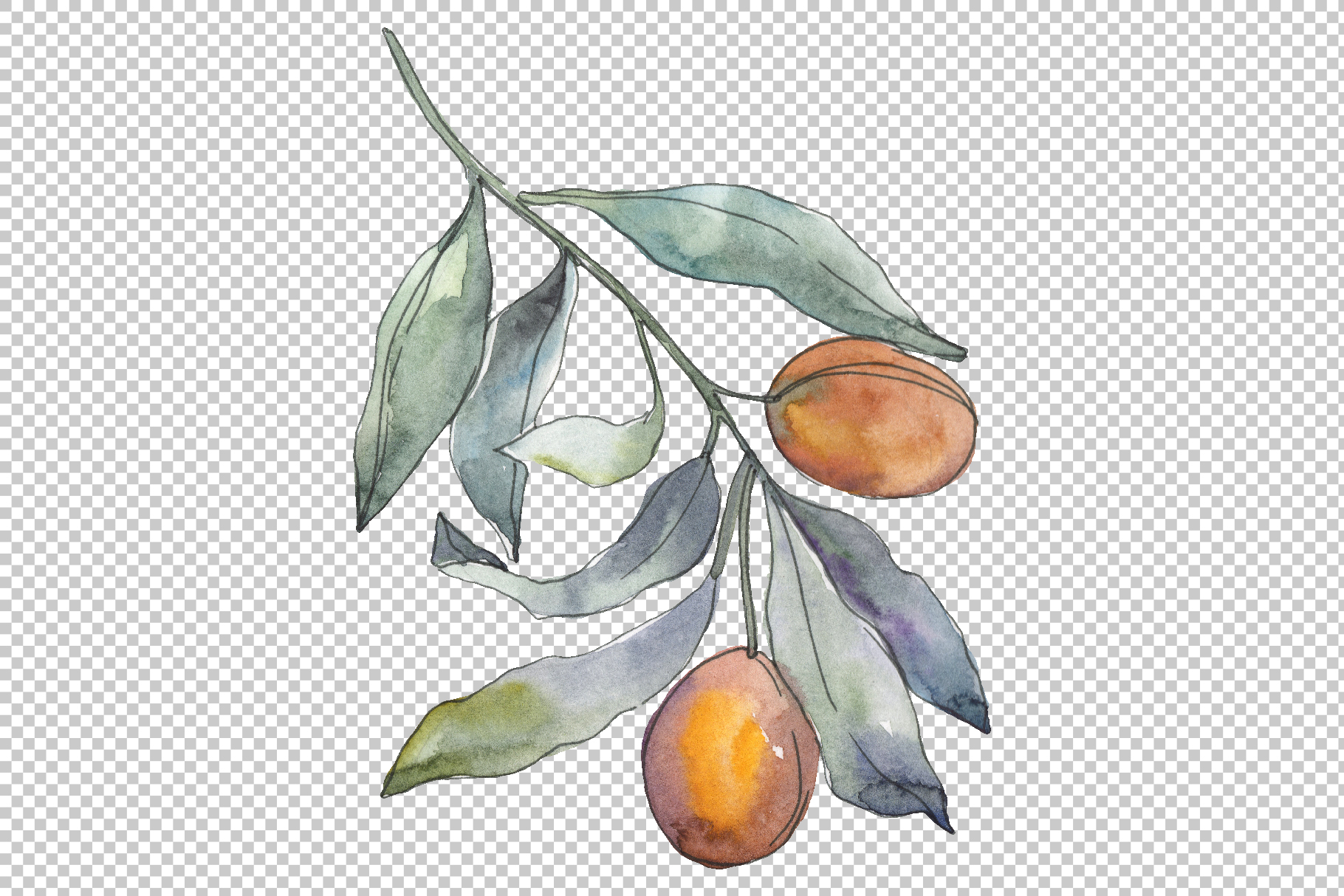 Olives 3 Watercolor png example image 5