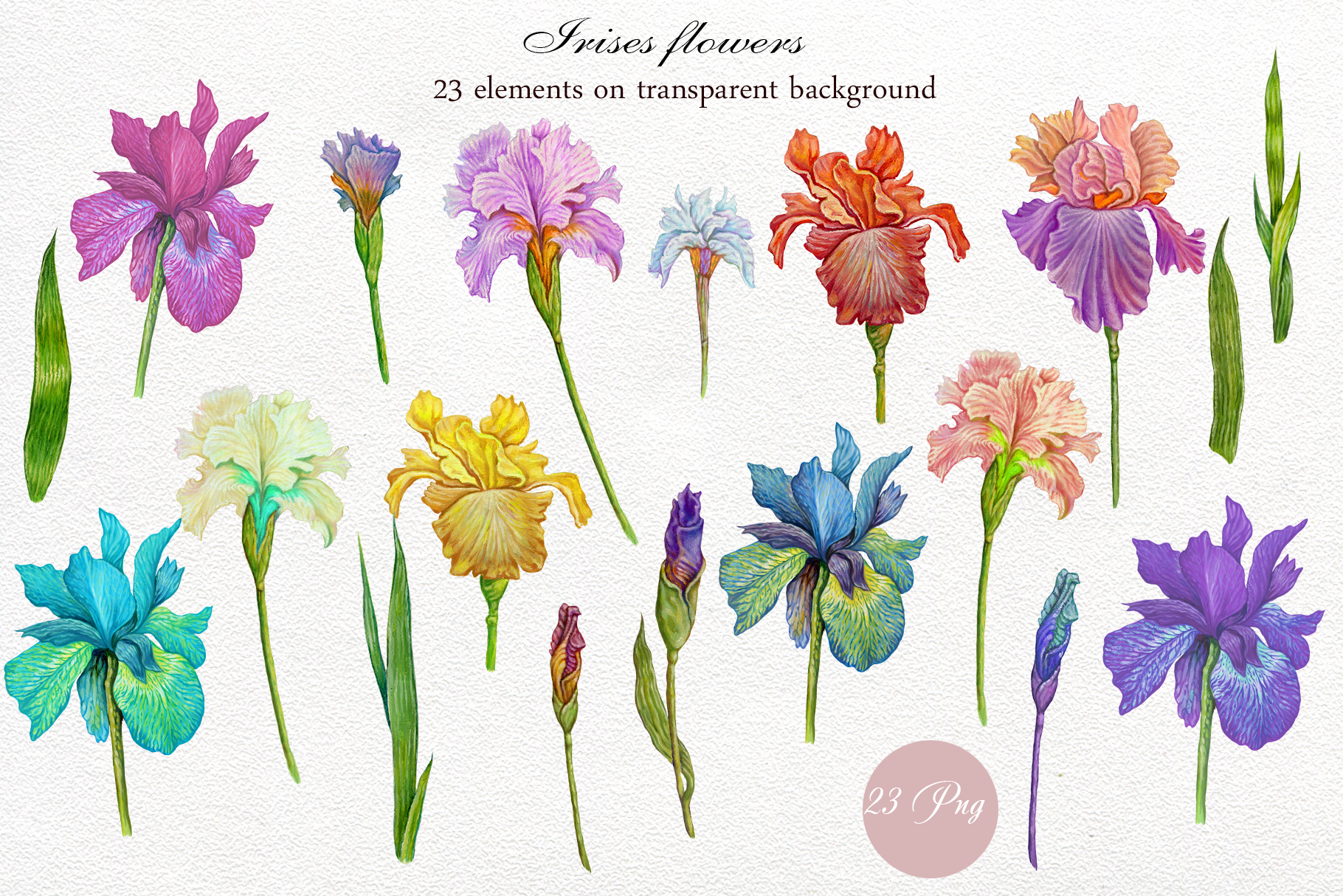 Flower Clipart, iris flowers,23 element Oil hand painting. example image 2