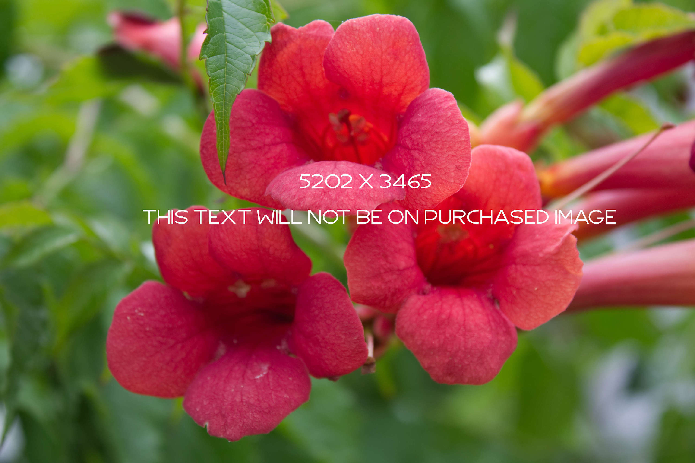 Botanical Photo Bundle, Large Nature Photos example image 2