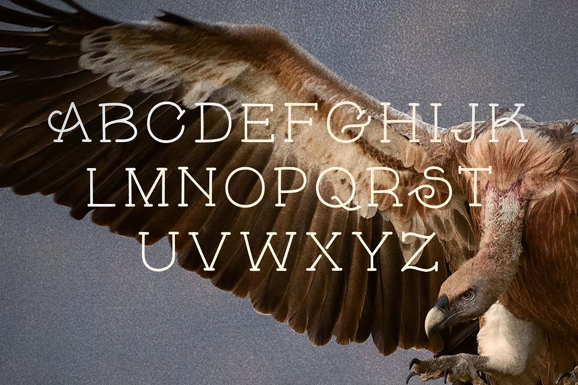 Skybird Family - Crazy, unique & retro example image 9