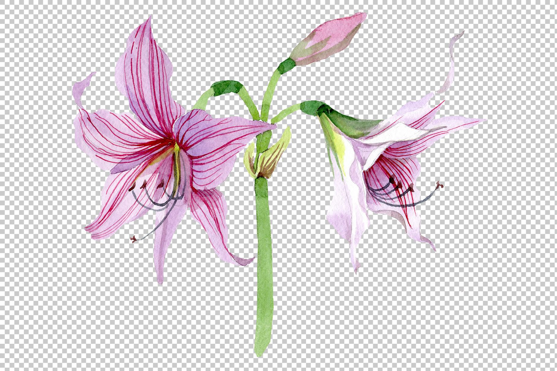 Purple amaryllis PNG watercolor flower set example image 2