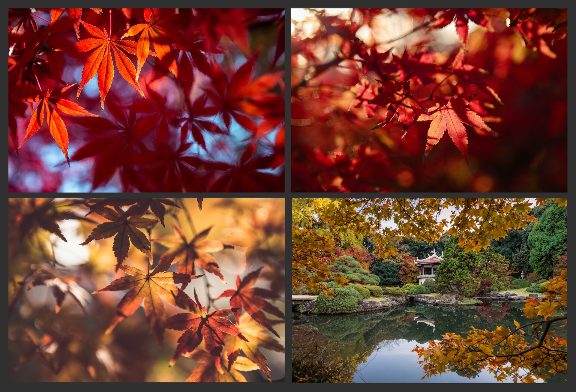The AUTUMN LEAVES Pack example image 6