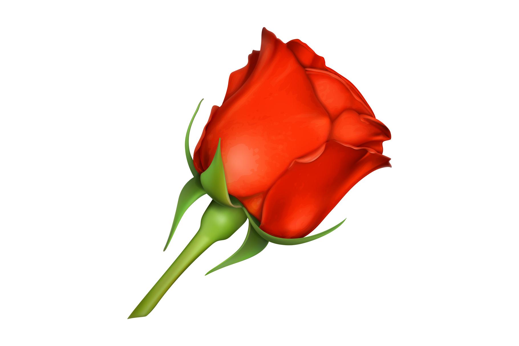 Rose, symbol of love, romantic Valentine's Day, vectors set example image 8