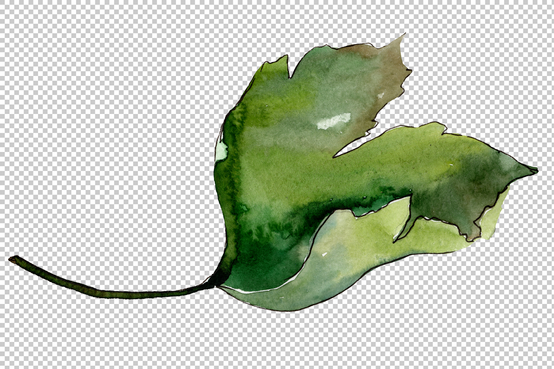 Gooseberry PNG watercolor plant set example image 5