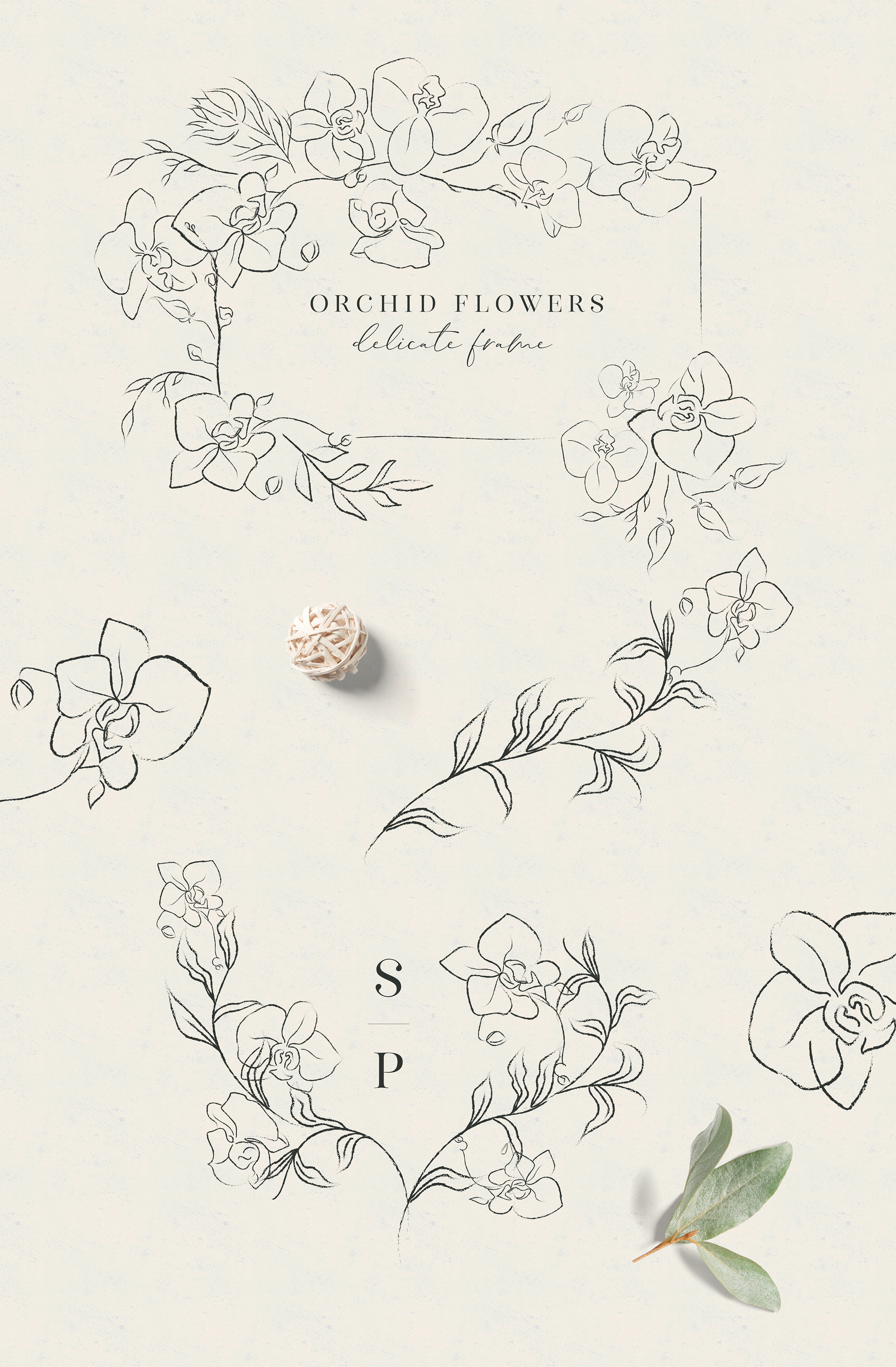 Line clipart hand drawn fine art graphic orchid flower example image 3