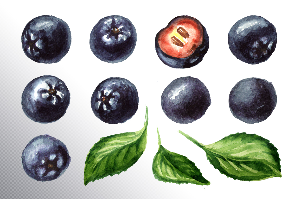 Aronia. Watercolor collection example image 9