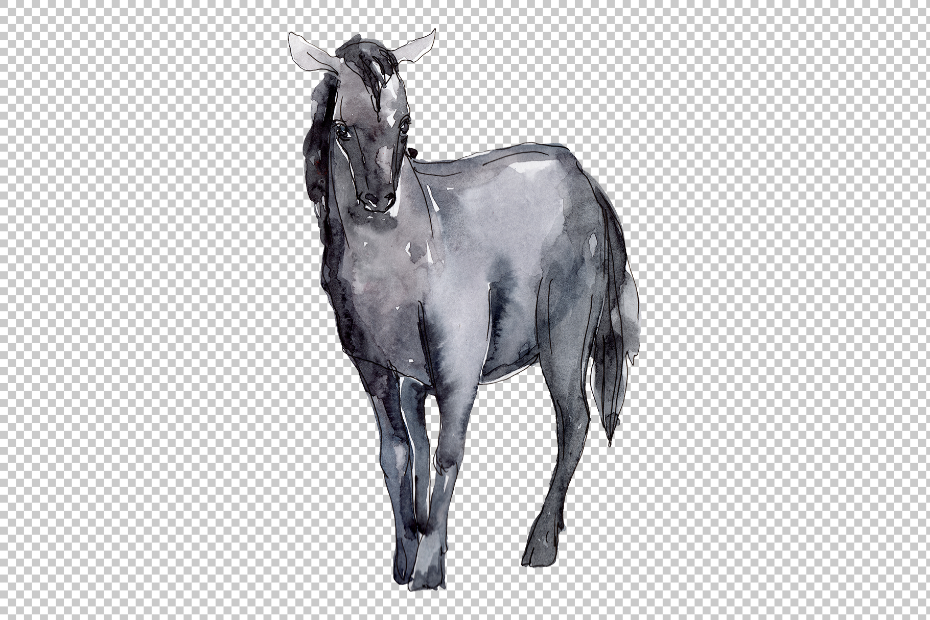 Farm animals Horse, foal Watercolor png example image 2