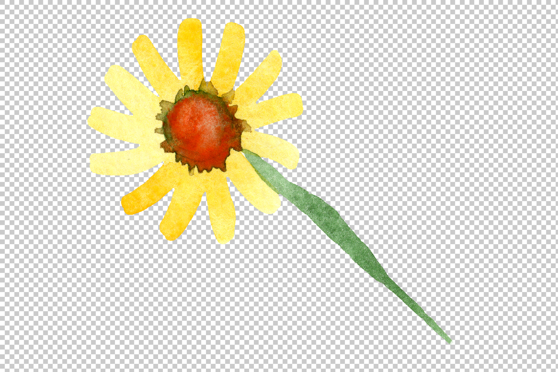 Yellow chamomile Watercolor png example image 8