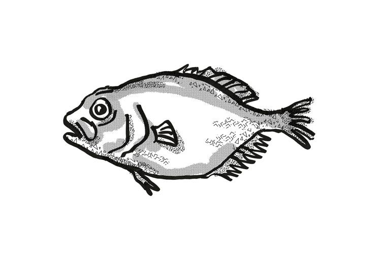 orange roughy New Zealand Fish Cartoon Retro Drawing example image 1
