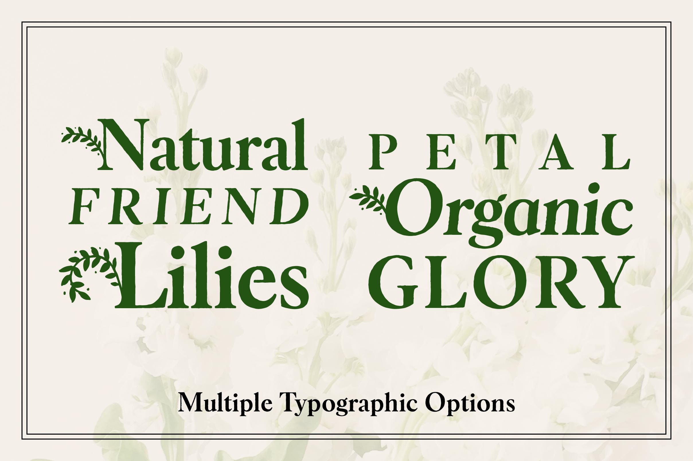 Botany Font Family example image 7