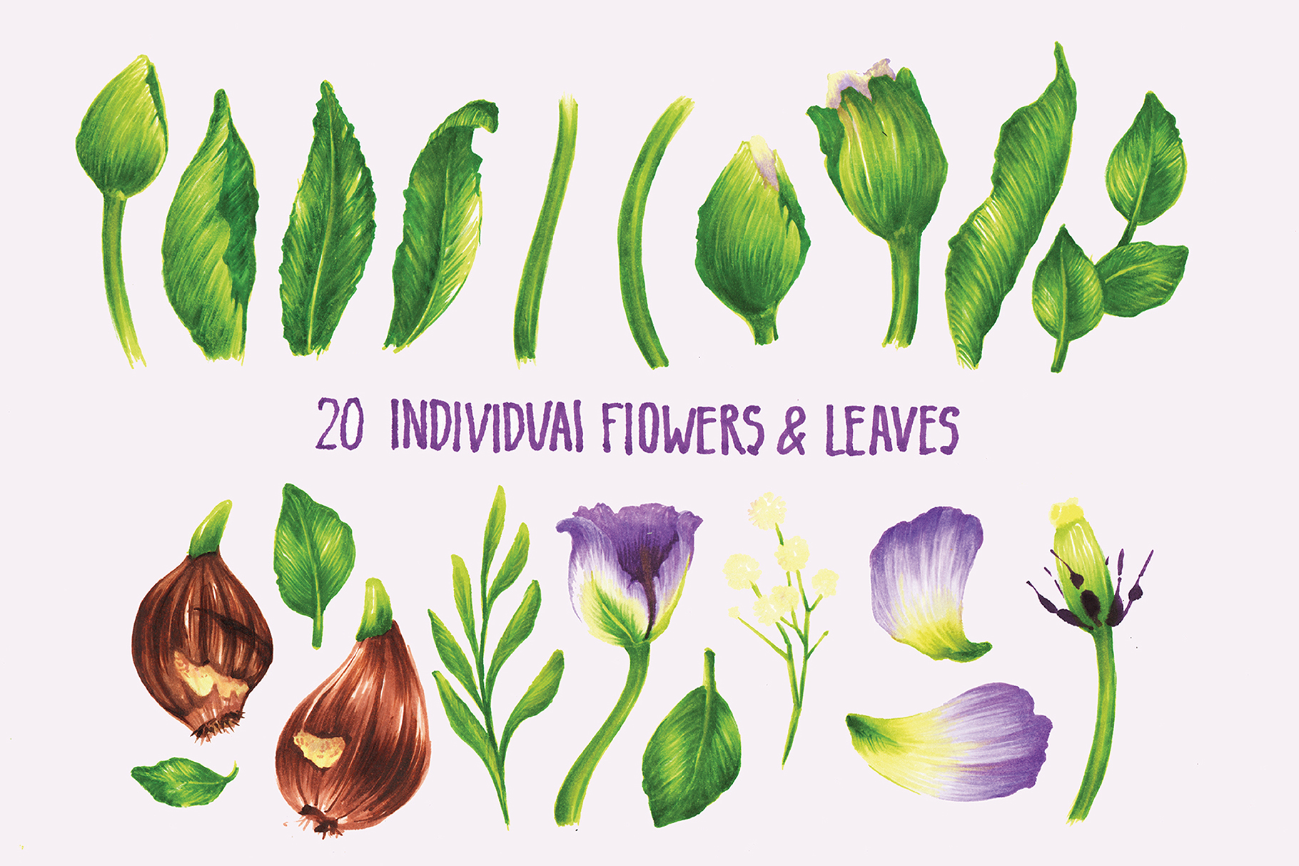Vector Set Of Violet Tulips example image 3