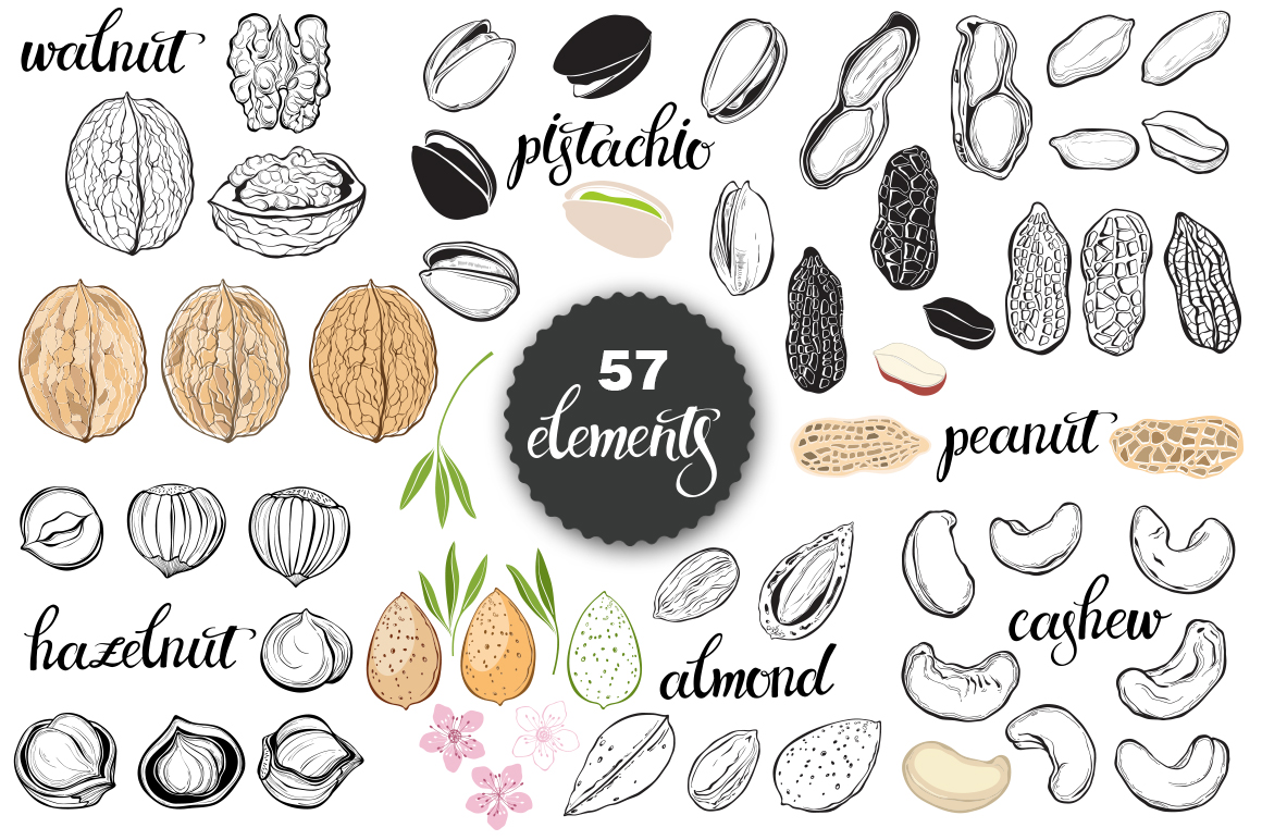 Nuts. Vector set. example image 2