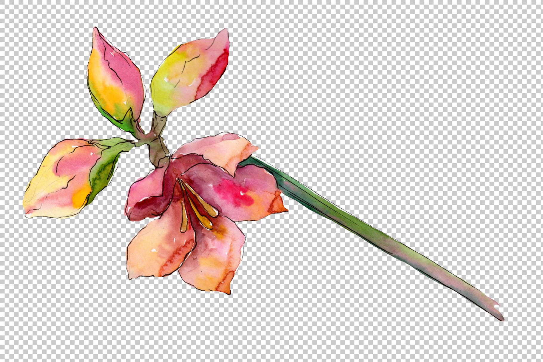 Beautiful watercolor amaryllis PNG set example image 5